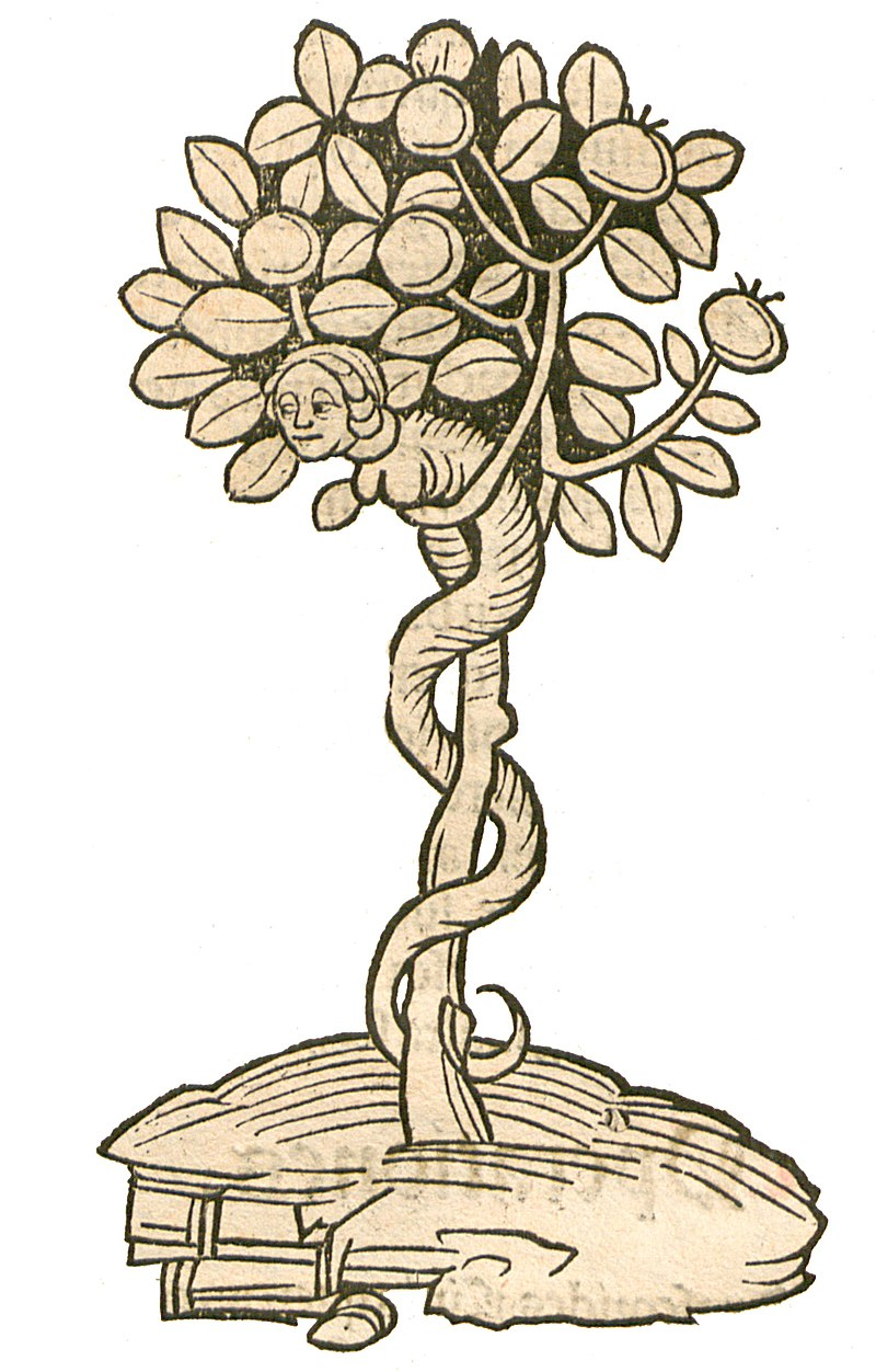 The Garden of Health - Natural History Encyclopedia by Jacob Maydenbach published in 1491. Image depicting the tree of life.