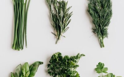 Top 7 Most Useful Herbs in Apothecary