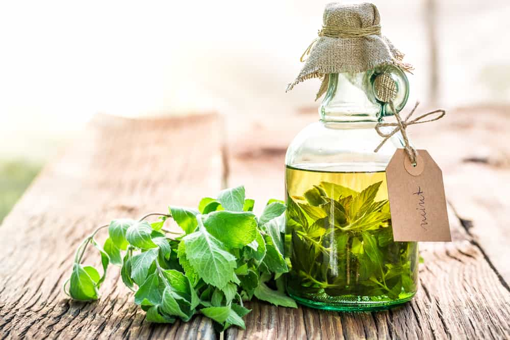 tincture mint herbal extract herbs used in medicinal natural remedies Herbal Remedies, Herb Catalog, What Herbs are best to use